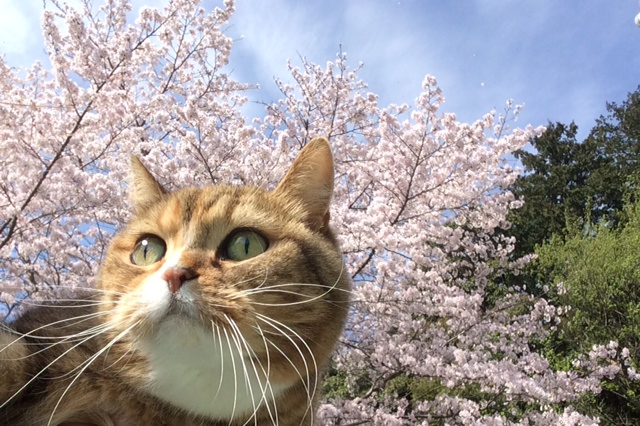 imageキャッティー桜