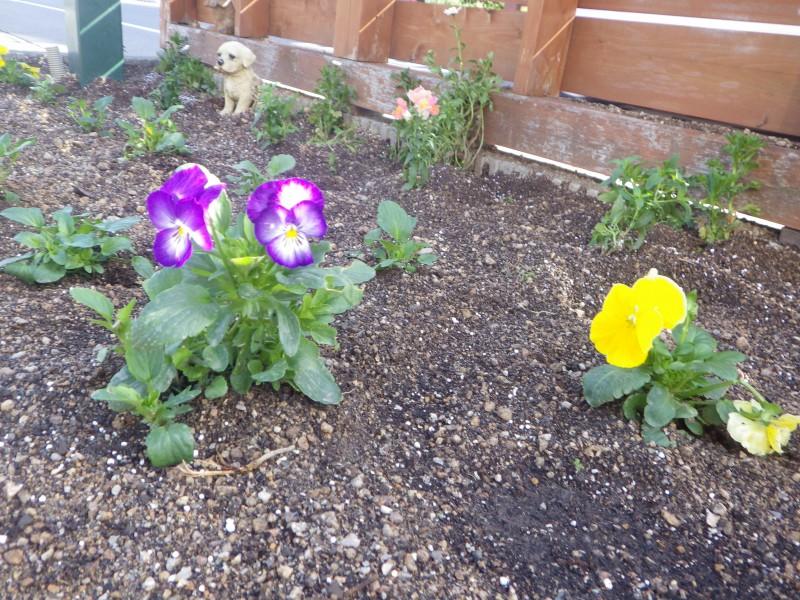 12月休診日のお知らせ&花壇の植え替え