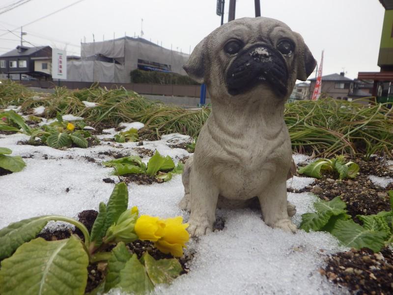 2月休診日のお知らせ&冬の寒さ対策