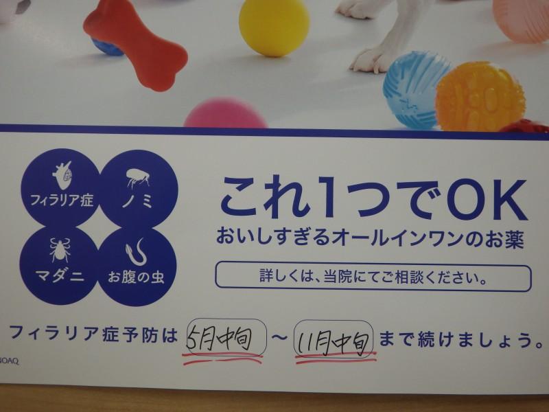 IMGP1661