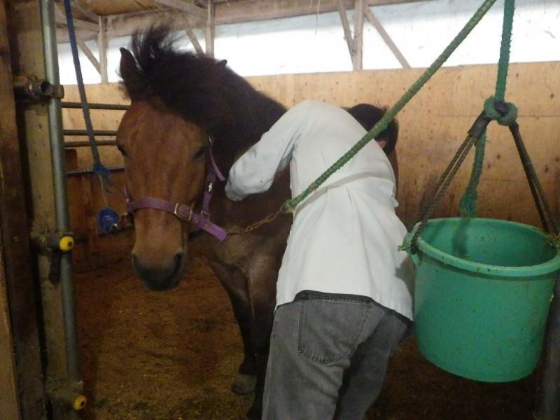8月の休診日&馬の注射